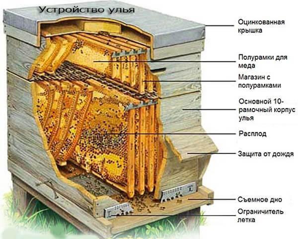 Изображение - Разведение пчел как бизнес ustrojstvo-ulja