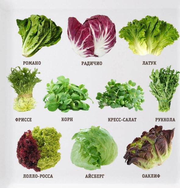 vidy-salatov